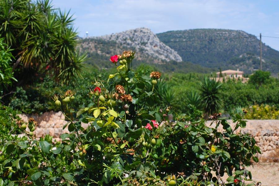 Can Paulino Mallorca - Ausblick - Ferienhauschen Lilly