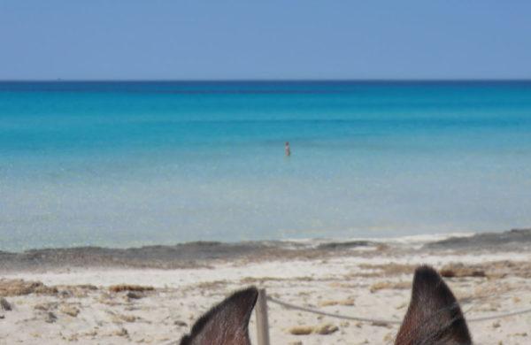 Can Paulino Mallorca - Ausritte - Strandausritte