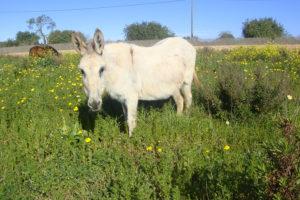 Can Paulino Mallorca - Pferd&Esel - Tierhaltung - Esel