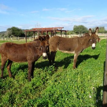 Can Paulino Mallorca - Tierhaltung - Esel