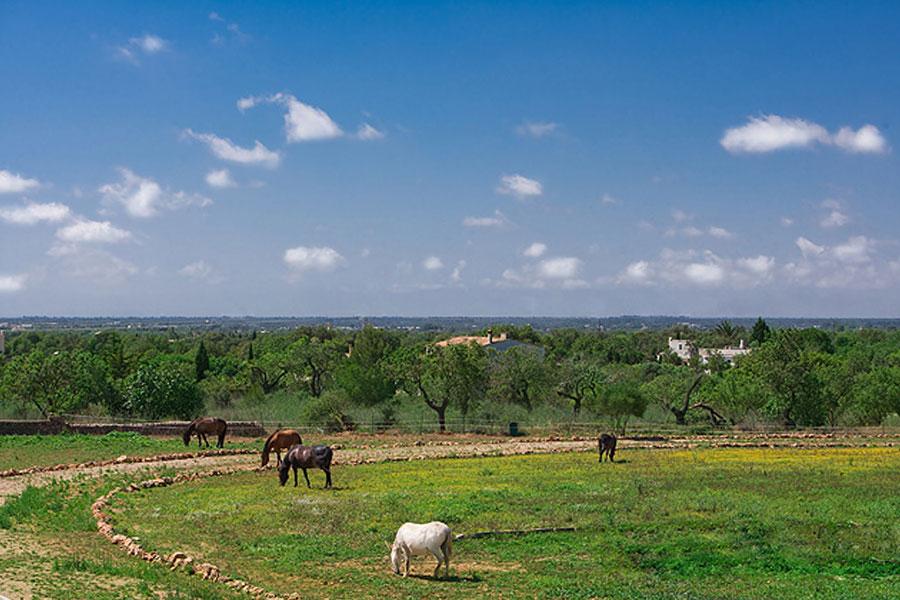Can Paulino Mallorca - Pferd&Esel - Tierhaltung