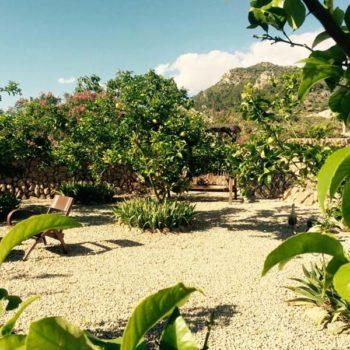 Can Paulino Mallorca - Zitronengarden - Studio Polly