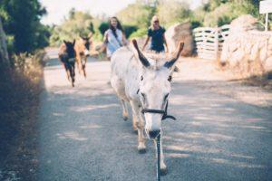 Can Paulino Mallorca - Eselwanderung -
