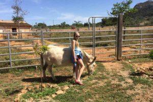 Can Paulino Mallorca - Bildern - Esel & Gast