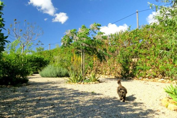 Can Paulino Mallorca - Bildern - Katze