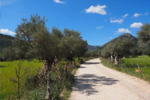 Can Paulino Mallorca - Bildern - Umland