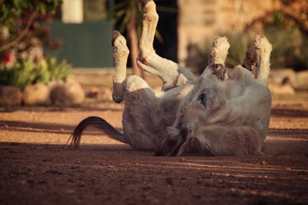 Can Paulino Mallorca - Unsere Tiere