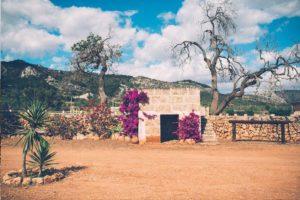 Can Paulino Mallorca - Uber Uns - Bio Finca