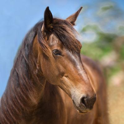 Can Paulino Mallorca - Unsere Tiere - Liska