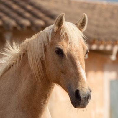 Can Paulino Mallorca - Unsere Tiere - Nikita