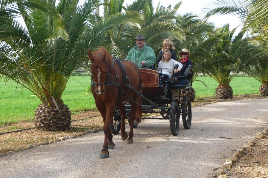 Can Paulino Mallorca - Pferd-Esel - Kutschfahrten