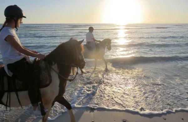 Can Paulino Mallorca - Ponyfahrten