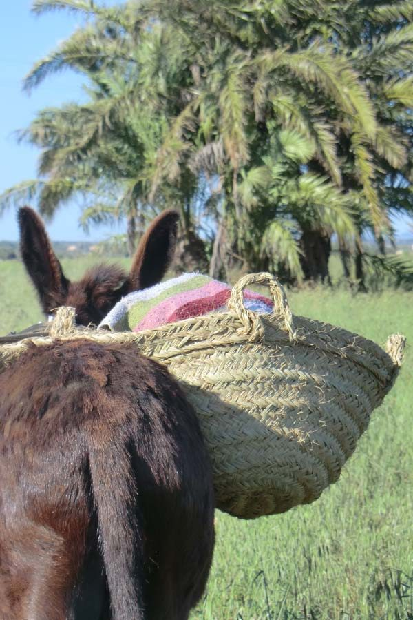 Can Paulino Mallorca - Eselwanderung - Esel mit Korb