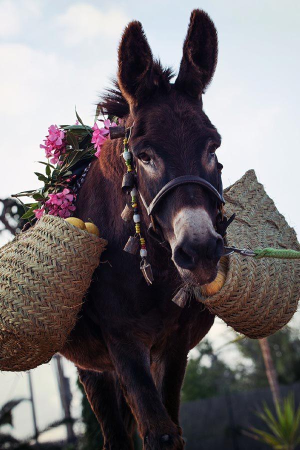 Can Paulino Mallorca - Bildern - Eselwanderung