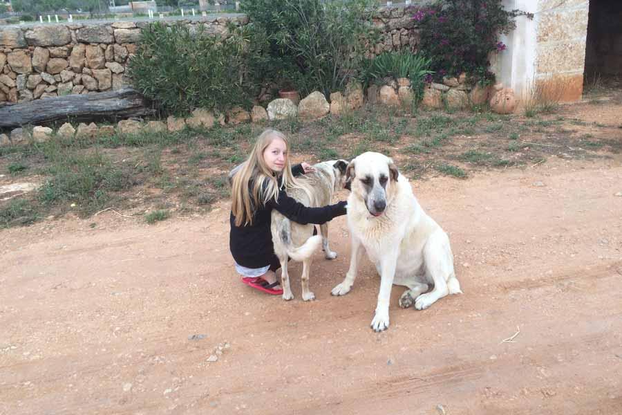Can Paulino Mallorca - Bildern - Hunden