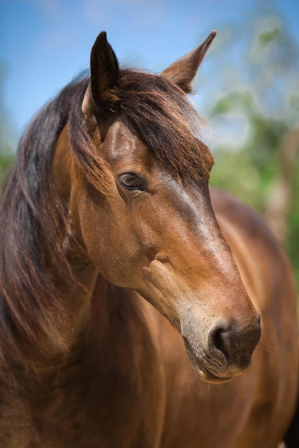 Can Paulino Mallorca - Bildern - Pferd