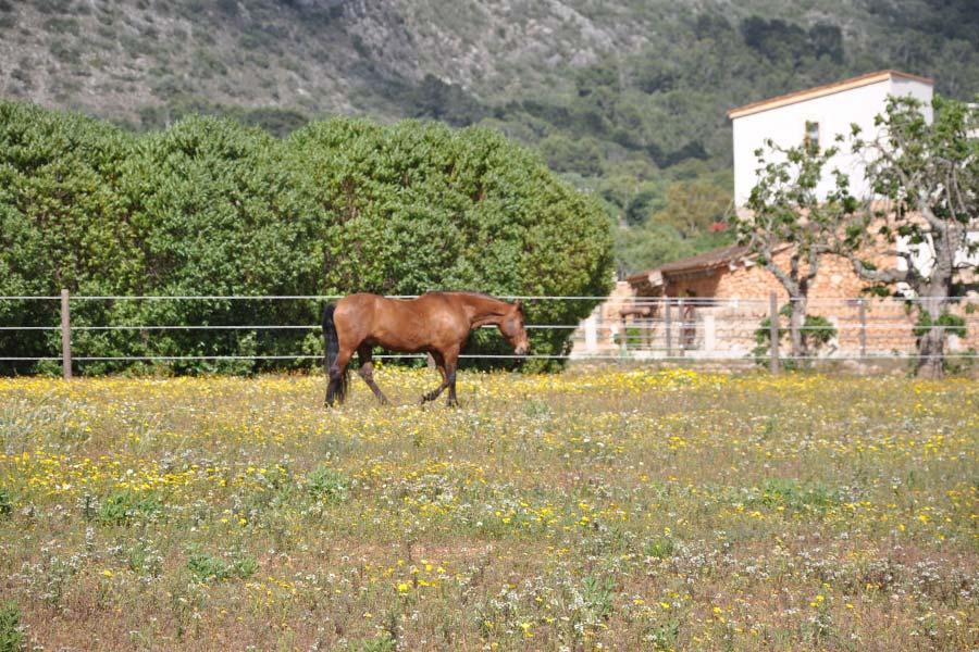 Can Paulino Mallorca - Pensionpferde
